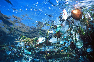 A glimpse of the trash in our oceans!