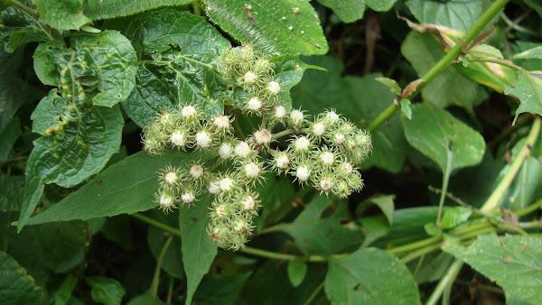 florada de arbustos melíferos