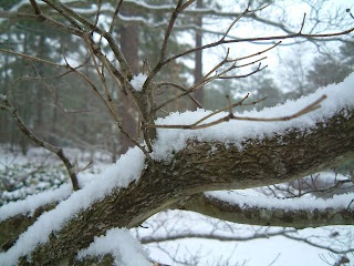 Snow in teh dogwood up front