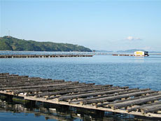 Akoya Pearl Farm in Japan