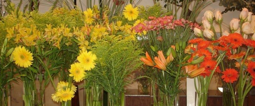 ALEGRIAS, CORES e PERFUME DE FLORES também fazem parte da GRANJA VIANA !