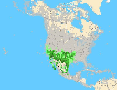 eBird Map Quiz 11