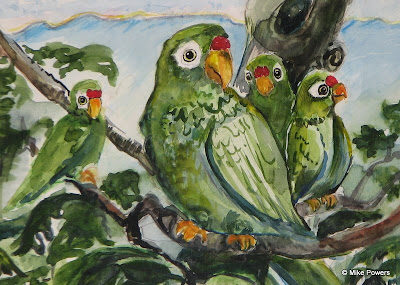 Puerto Rican Parrot watercolor