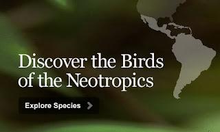 Neotropic Birds
