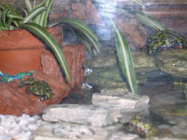 All Three Fire Belly Toads