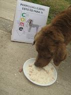Actividad día del perro callejero 2008