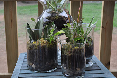 eco gifts: terrariums for home