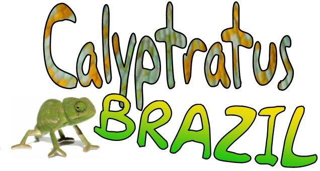 CALYPTRATUS-BRAZIL
