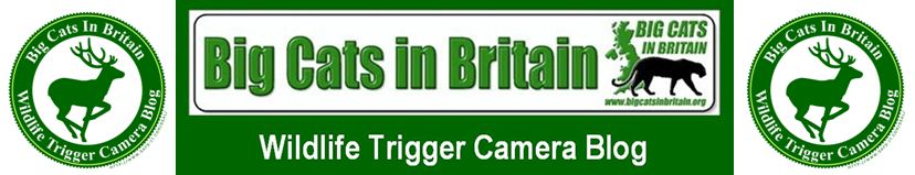Big Cats In Britain Wildlife Trigger Camera Blog