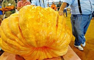 sayuran buah terbesar