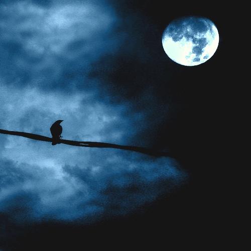 [el+cuervo+enamoirado.jpg]