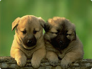 cute dog names . cute dogs . cute dog names for girls . cute dog pictures . very cute dog background