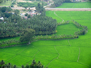 suraj_gallery: Beautiful Tamilnadu!!!