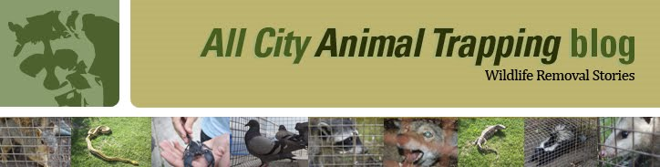 All City Animal Trapping