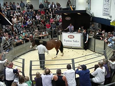 greenwich roundup 123108 where did the fairfield greenwich horse sales 400x300