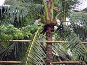 Jembatan Bambu di atas pohon
