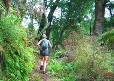 Whirinaki Forest Paul Charteris