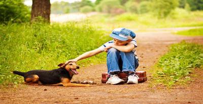 Browse › home › » anjing tunarungu belajar bahasa isyarat