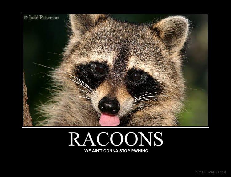 how to stop raccoon latrine