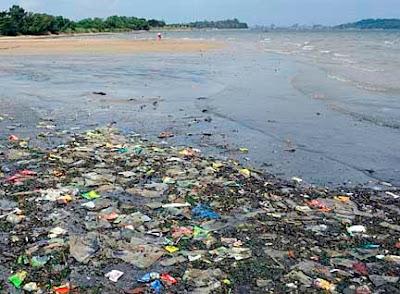 wild shores of singapore: Dead Fish Patrol: Pasir Ris