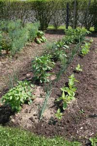 Using Vegetable Garden Space Efficiently