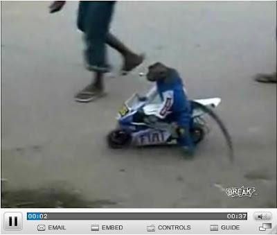 Monkey riding a motorycle