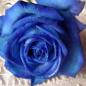 Plavo kao ... - Page 5 Sina+roza1