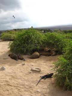 Galapagos Threesome