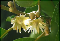 Yala Flower