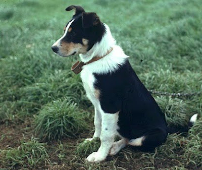 Image Result For Dog Training New