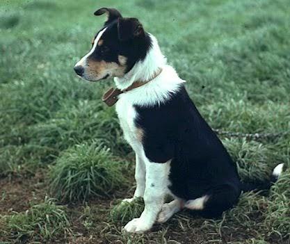 Top Dog Training School Dartford