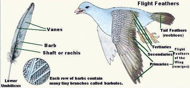 Aves Park: BIRDS UNIQUE FEATHERS
