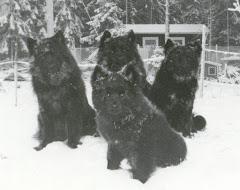 Våra första hundar