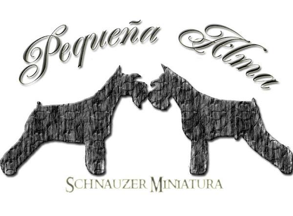 PEQUEÑA ALMA SCHNAUZER