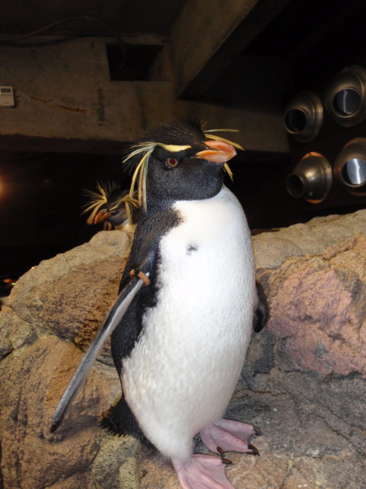 Do penguins have feathers - photo#8