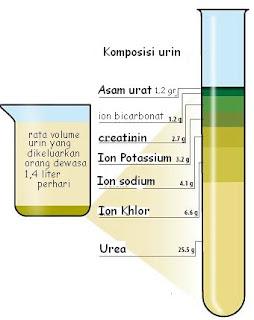 Volume urin normal per hari adalah 900 – 1200 ml, volume tersebut