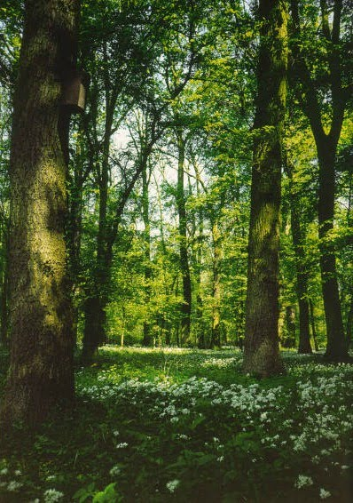 [floresta[1].jpg]