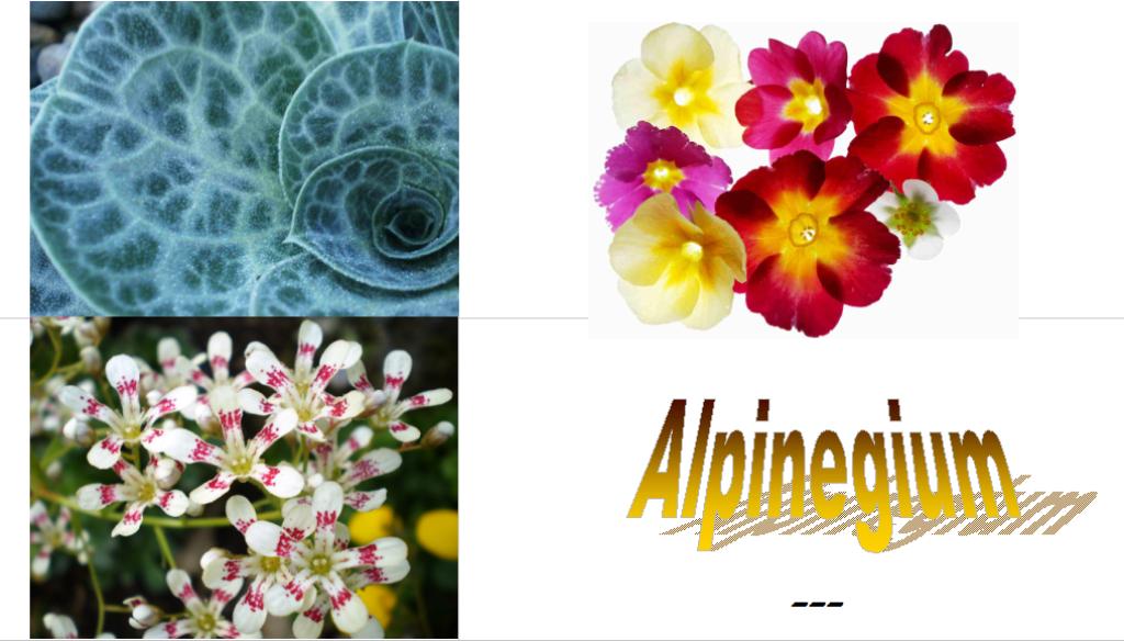 Alpinegium