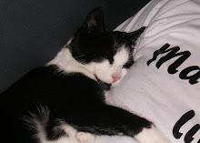 En älskad katt till
