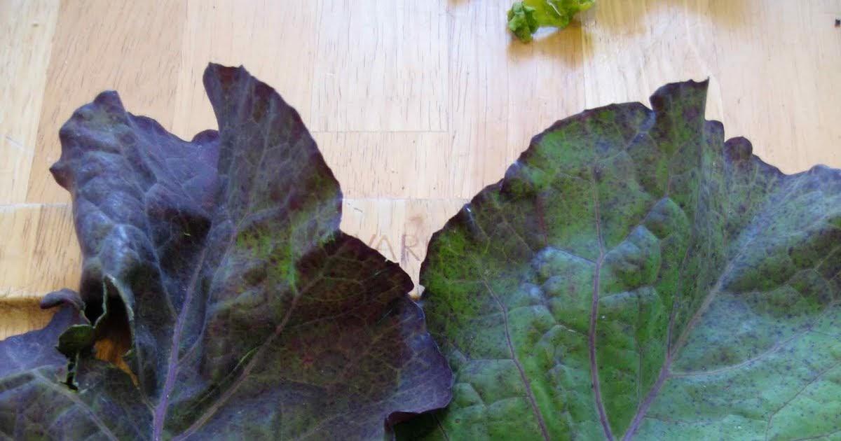 weird vegetables: Last of the Tree Collards