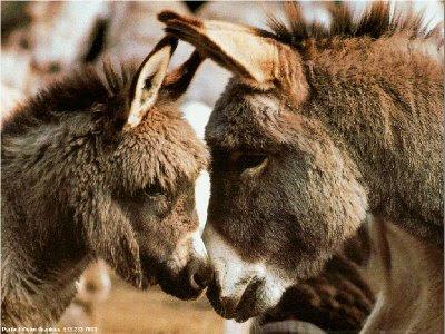 معادلة الحياة الزوجية Donkey