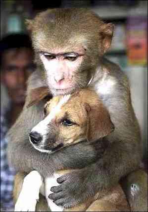 nah itulah foto-foto lucu monyet,semoga menghibur.....