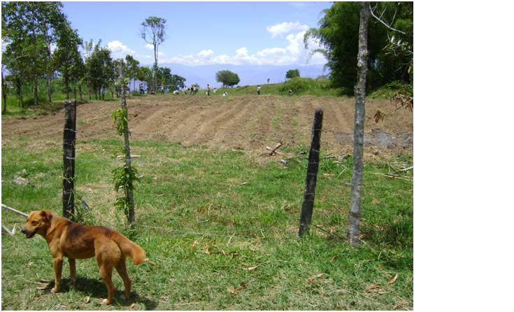 Zona de cultivos