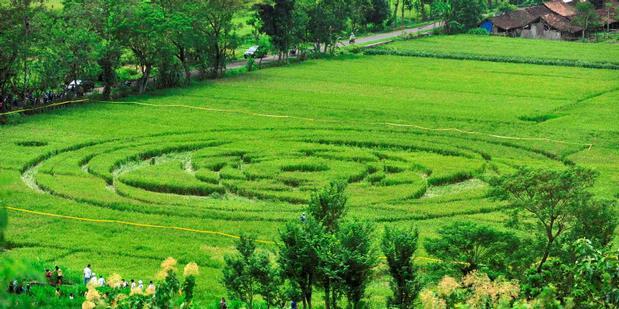 fenomena crop circle ufo sleman yogyakarta indonesia