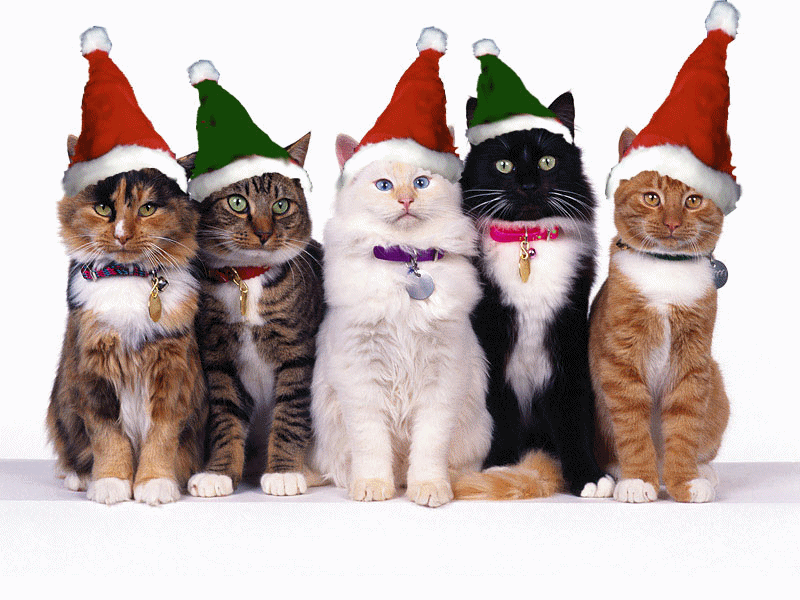 [Christmas+cats.htm]