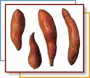 sweet                                        potato ethanol USDA