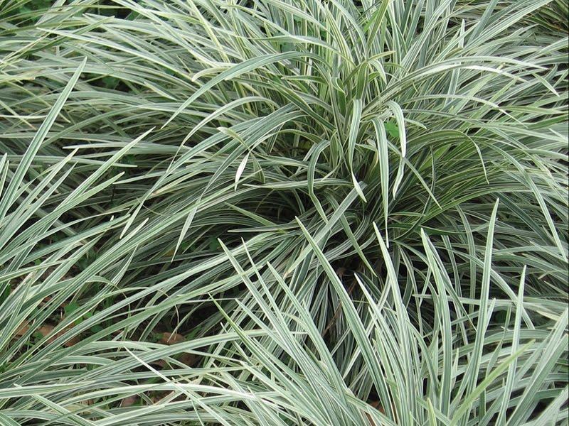 Medell n re vista la cinta verde medell n colombia - Cinta planta ...