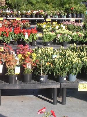 Medell n re vista a la venta medell n colombia for Viveros plantas ornamentales colombia