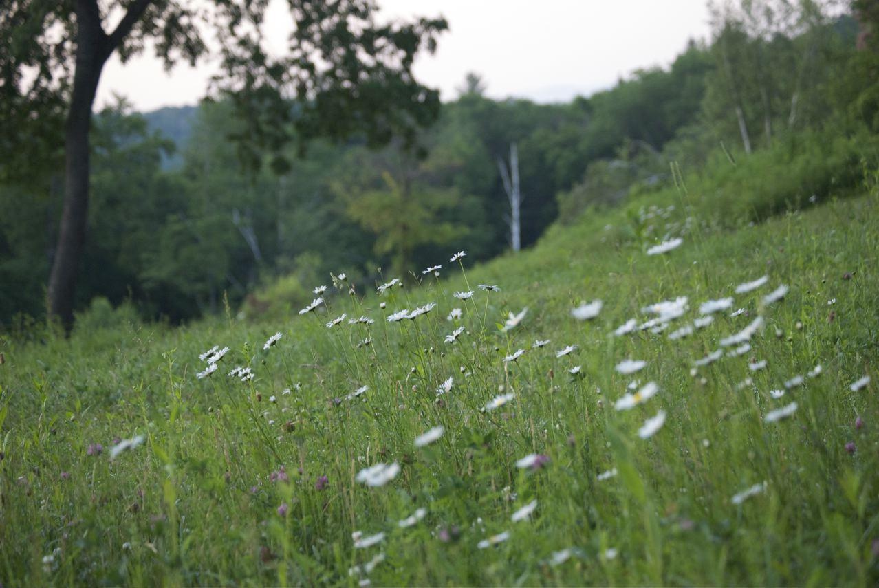 Flower Hill Farm Wildflower Wednesday Wonder 39 Asclepias