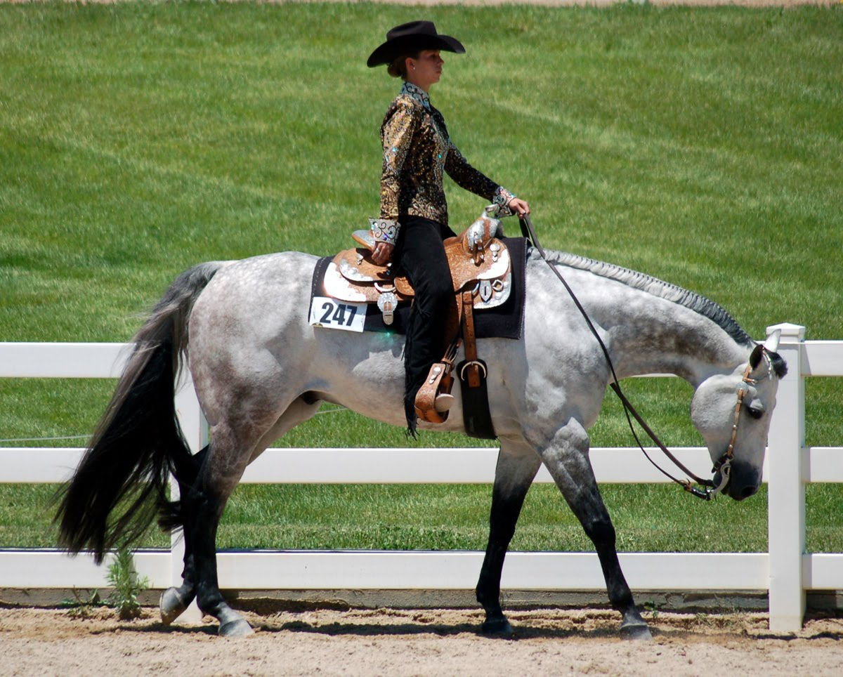 What disciplines exist in equestrian sports